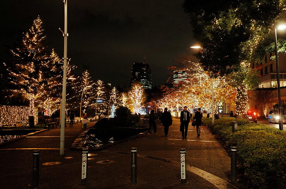 ツリーイルミネーション(Tree Illumination)