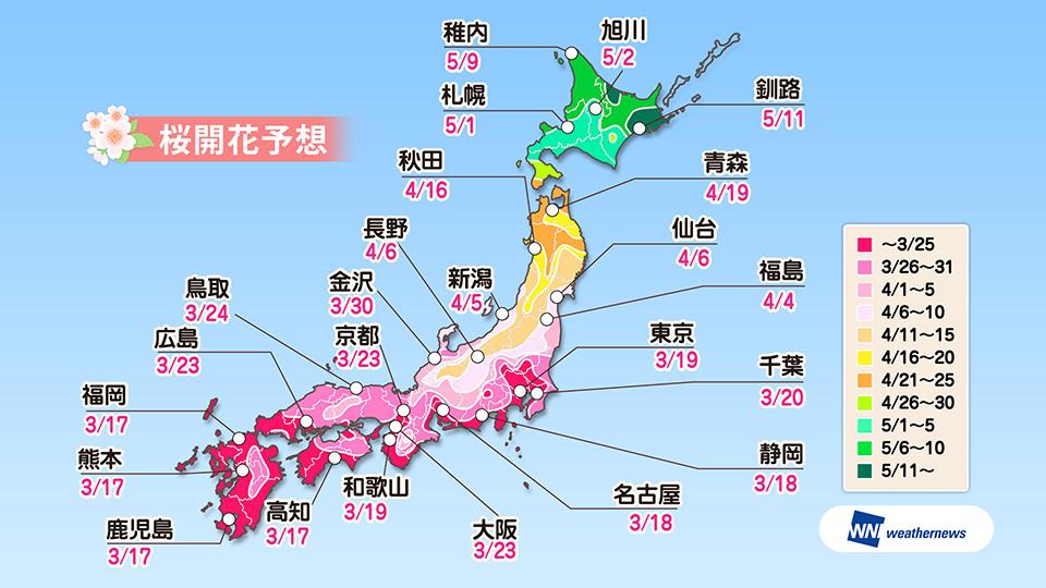weathernews 櫻花前線