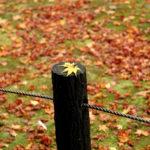 染了一身秋色,於京都。