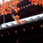 晚秋時節於京都真如堂賞紅葉