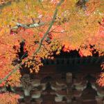京都南禪寺賞紅葉‧記憶抖落的片段