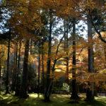 靜謐的京都三千院和其迷人的紅葉
