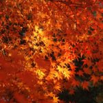 京都秋天暖色調的景致,真如堂和南禪寺(影片)