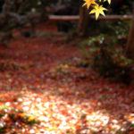 京都祇王寺紅葉‧靜謐的秋