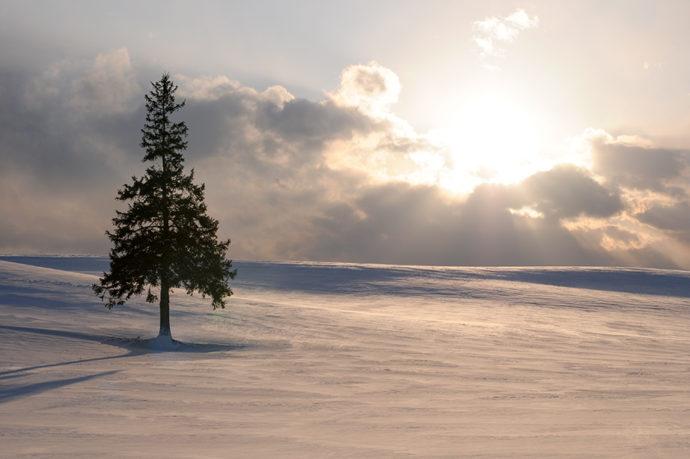 美瑛傍晚和聖誕樹