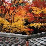 京都紅葉‧泛著螢光的高桐院