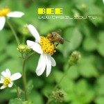 [那一瞬間] 蜜蜂