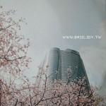 東京【櫻‧花雨】之旅的明信片飛回來了!