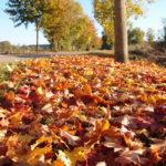 法國 Chablis 美麗的秋色