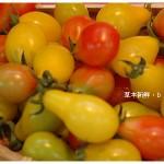 【那一瞬間】蕃茄&甜椒於金勇休閒農場