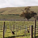 【澳洲】傑卡斯之旅‧二字排開的品酒會、把酒回敬葡萄園