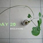 魔蛋生長紀錄 DAY 20 以及野放日