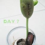 魔蛋生長紀錄 DAY 7