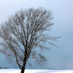 紀念日前倒下的哲學之木(哲学の木)
