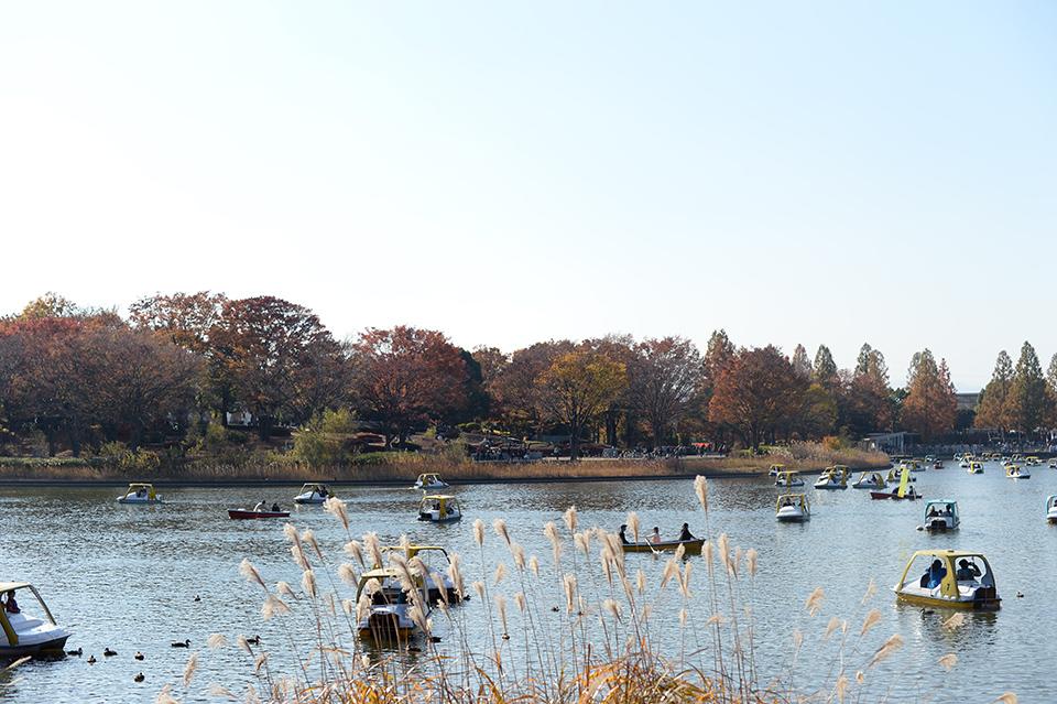 水鳥の池(水鳥池)