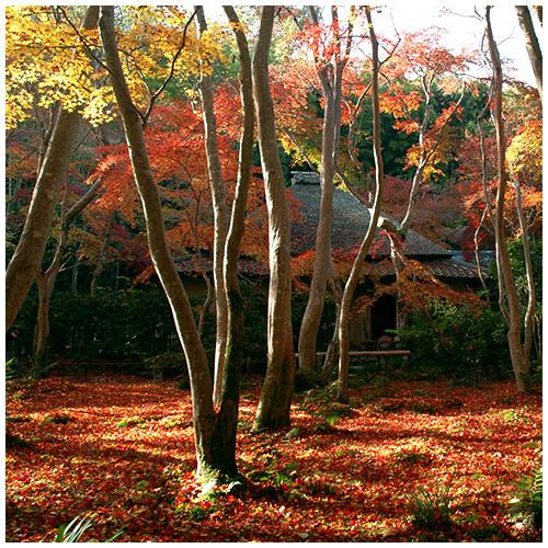2005 日本京都賞楓之旅