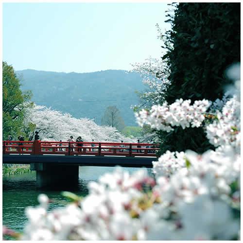 2009 日本京都賞櫻之旅