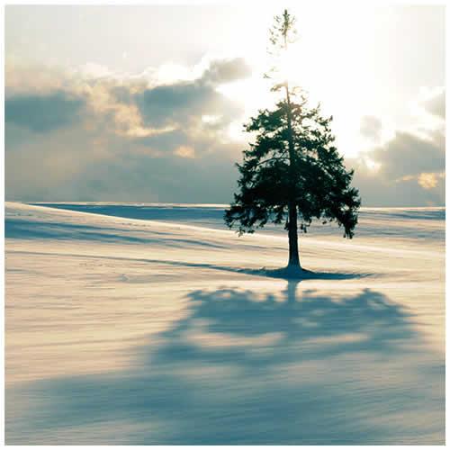 2010 日本北海道隆冬之旅