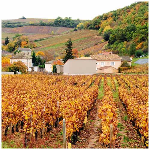 2011~2012 法國酒鄉、里昂和巴黎慢遊